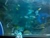 ... fra pesci, squali e cavallucci marini